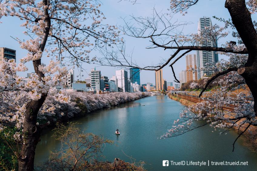 จุดชมซากุระที่โตเกียว Sotobori Park