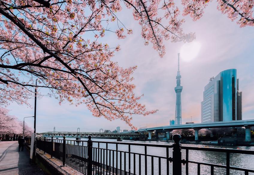 ที่ชมซากุระที่โตเกียว Sumida Park