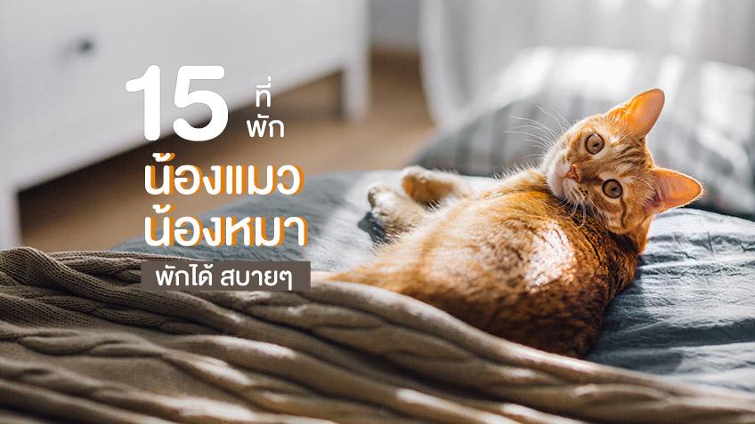 โรงแรมหมาแมวพักได้