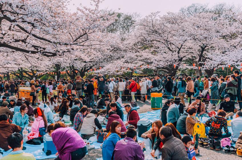 Ueno Park จุดชมซากุระที่โตเกียว