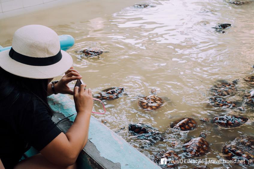 ศูนย์อนุรักษ์พันธุ์เต่าทะเล ที่เที่ยวระยอง