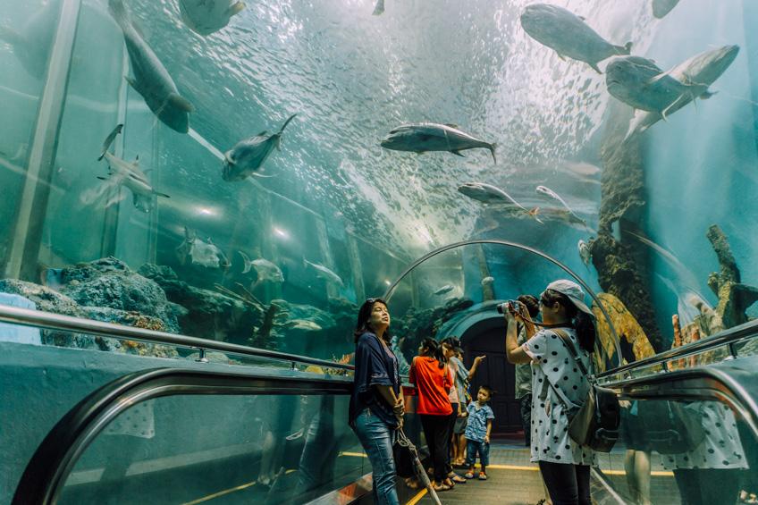 สถานแสดงพันธุ์สัตว์น้ำระยอง
