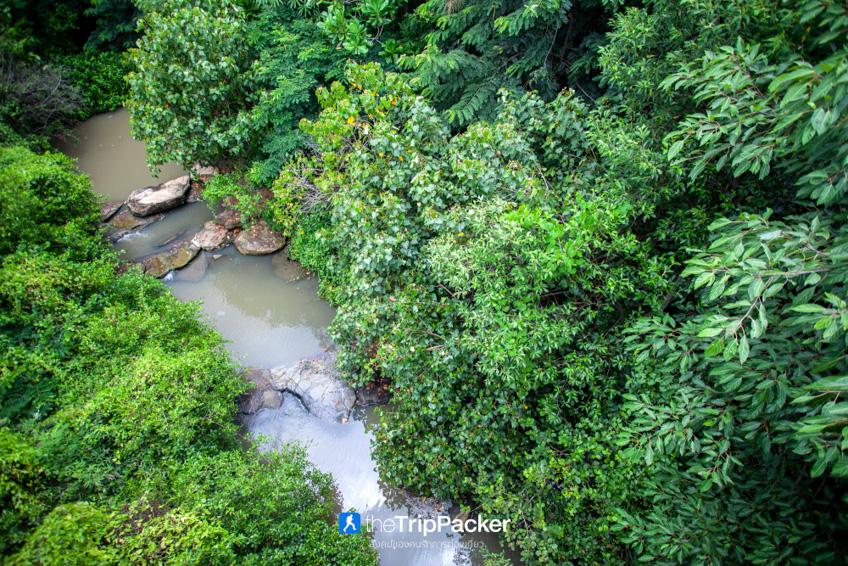 ที่เที่ยวกรุงเทพ ป่าในกรุง