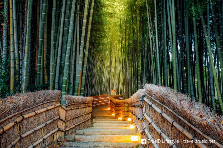 Sagano ฺBamboo Forest ญี่ปุ่น