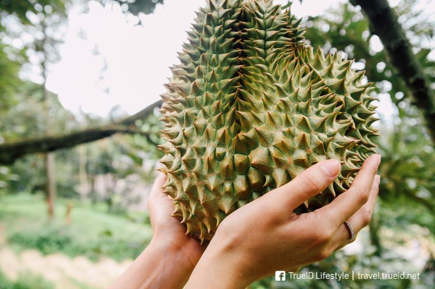 สวนผลไม้จันทบุรี