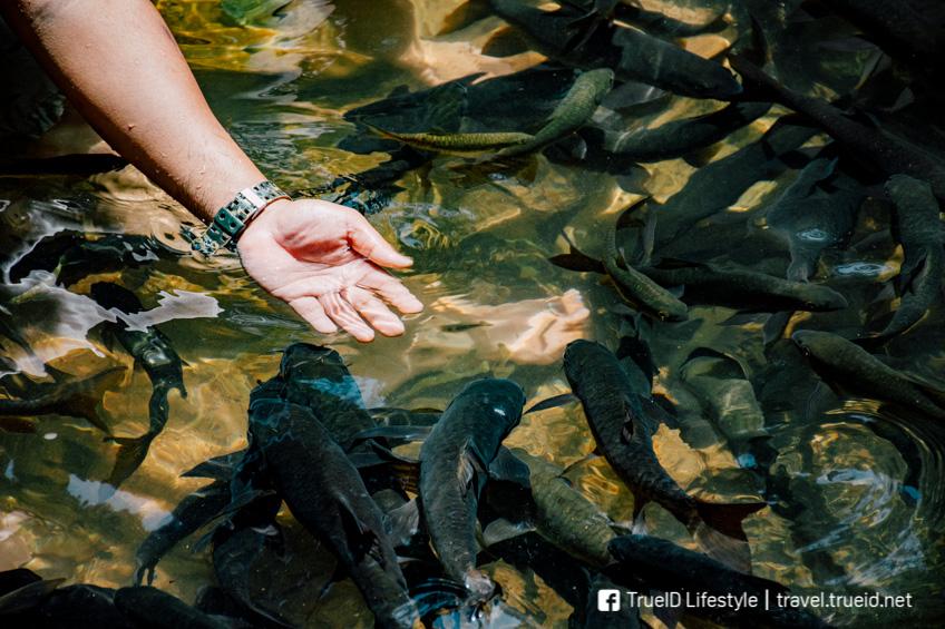 น้ำตกพลิ้ว ที่เที่ยวจันทบุรี