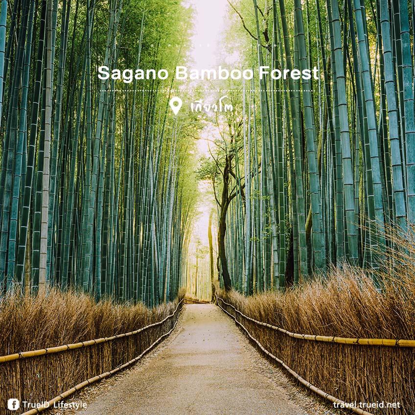 Sagano เที่ยวญี่ปุ่น
