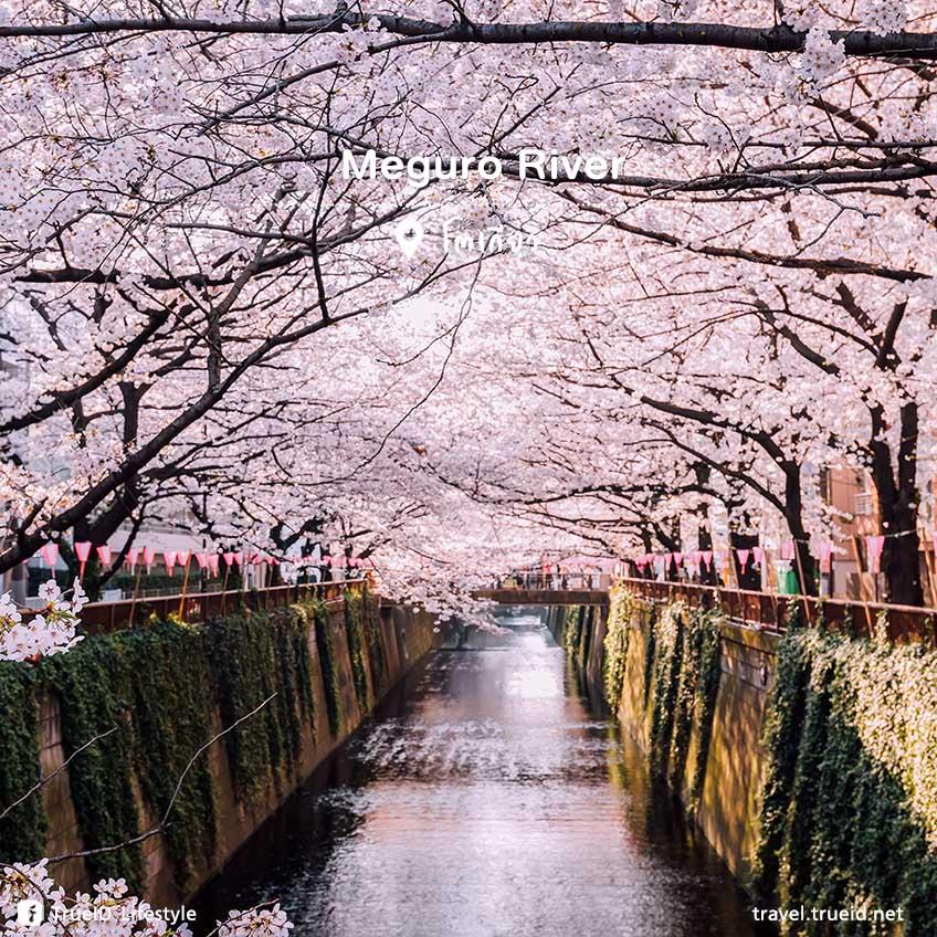 Meguro River เที่ยวญี่ปุ่น