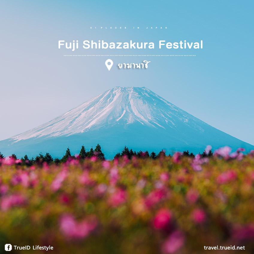 Fuji Shibazakura Festival ญี่ปุ่น