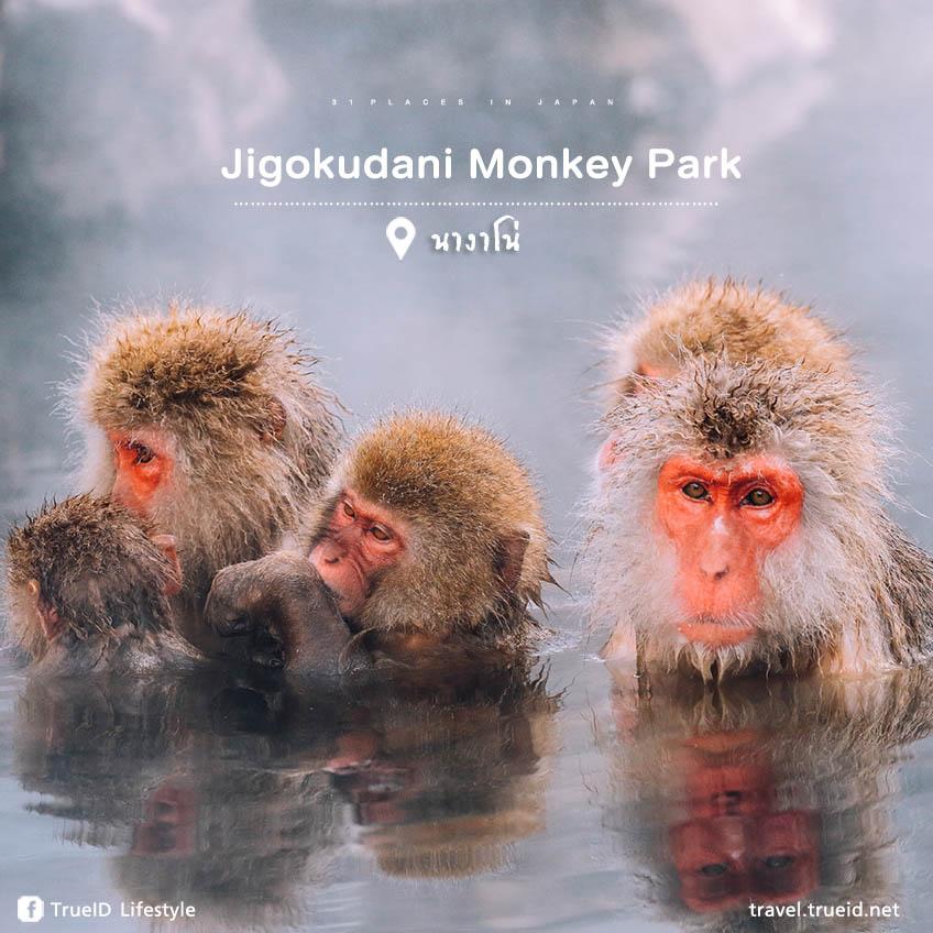 ญี่ปุ่น Jigokudani Monkey Park