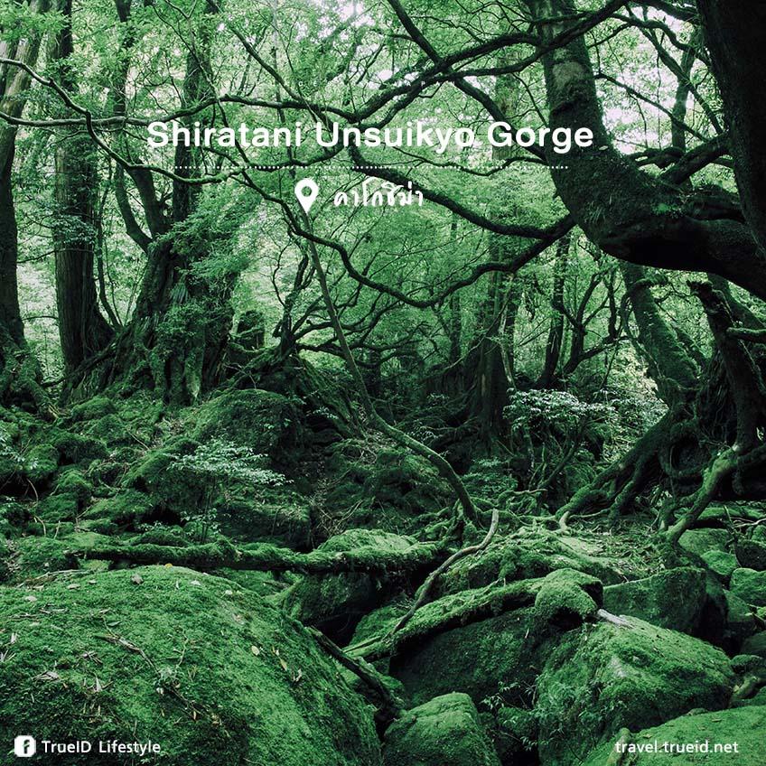 เที่ยวญี่ปุ่น Shiratani Unsuikyo Gorge
