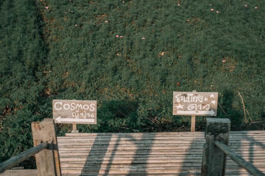 กระเพรา & COFFEE คาเฟ่ลพบุรี วิวทุ่งนา สุดชิค ฟีลธรรมชาติ ถ่ายรูปสวย