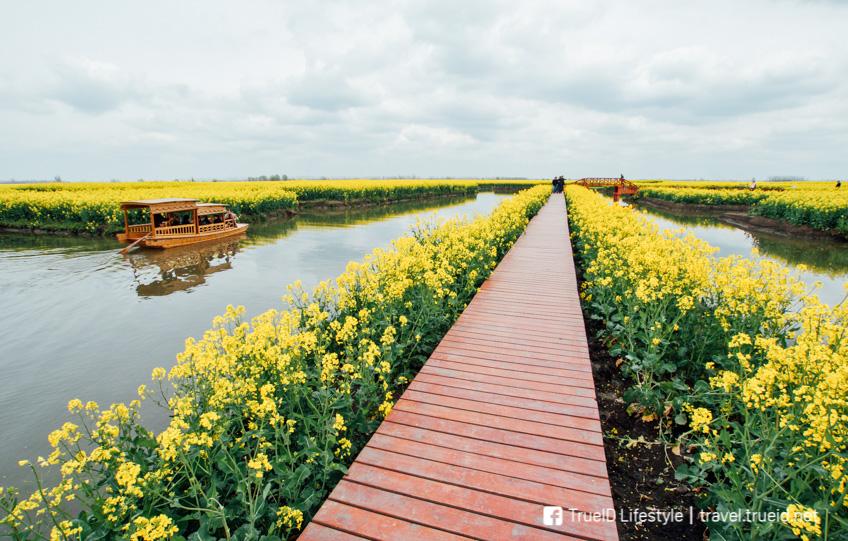 ทุ่งดอกไม้สวยในจีน เมืองซิงฮั่ว