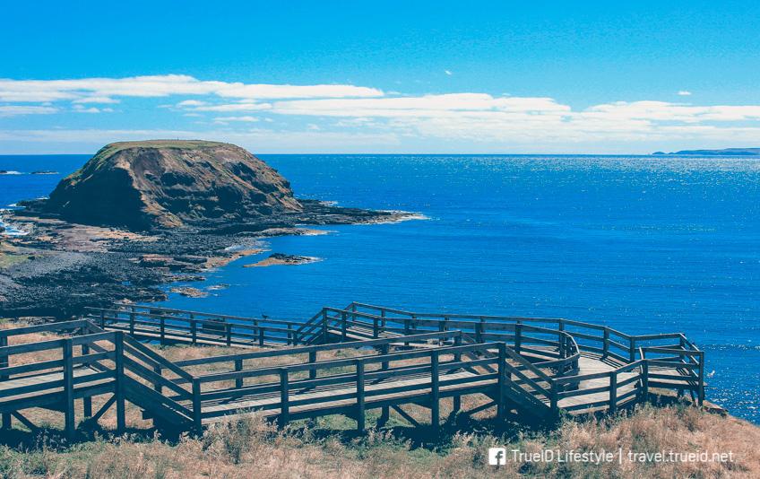 ที่เที่ยวออสเตรเลีย Phillip Island