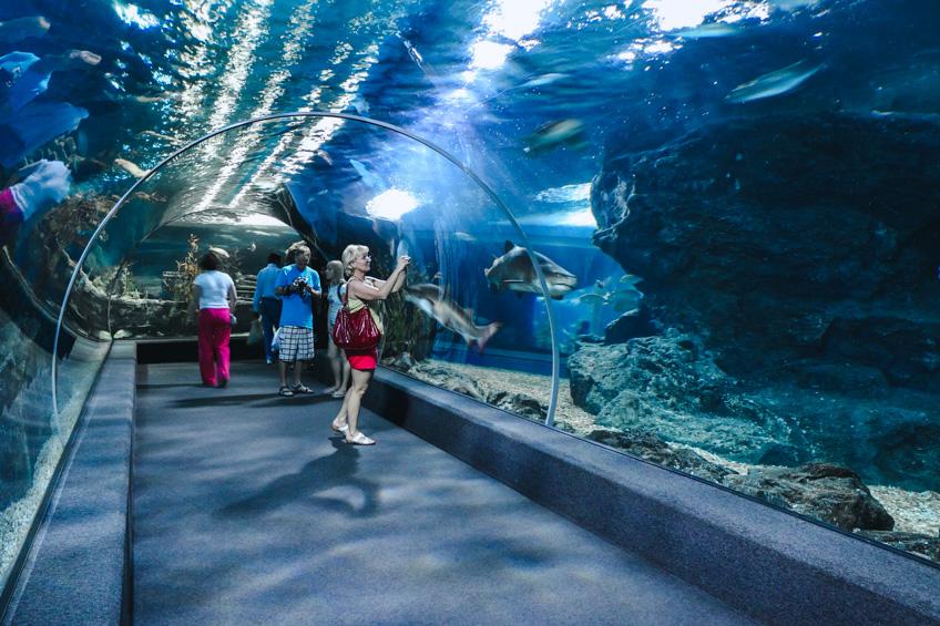 ที่เที่ยวพัทยา Underwater World Pattaya