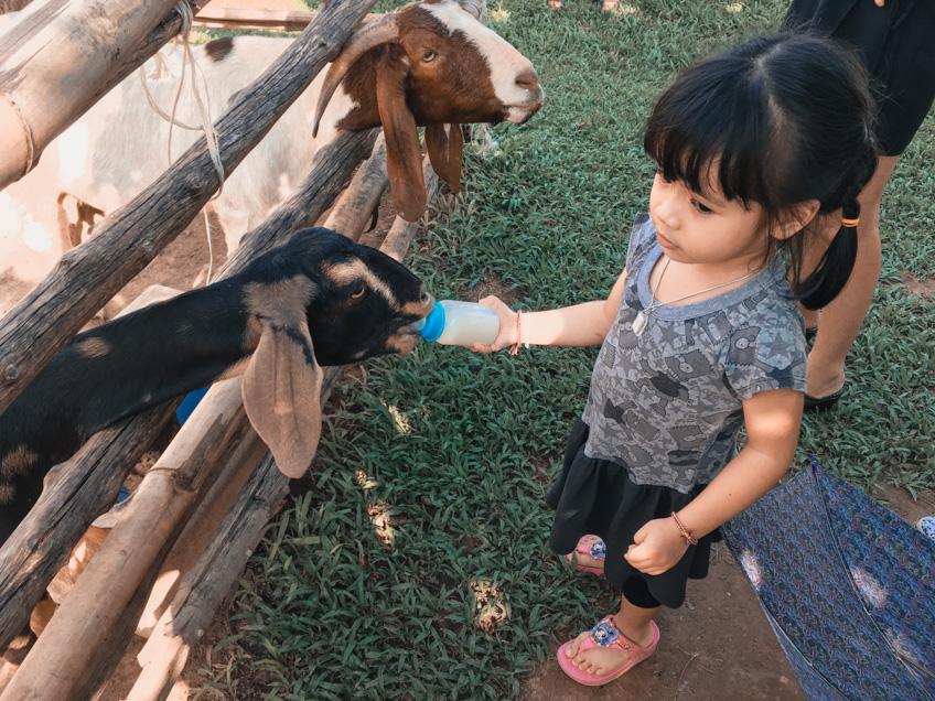 The Field Animals Dream ที่เที่ยวเพชรบุรี