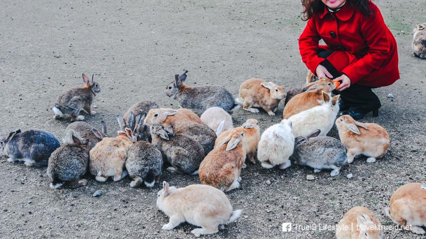 Okunoshima ที่เที่ยวคนรักสัตว์