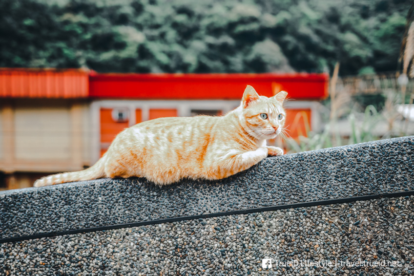 ที่เที่ยวคนรักสัตว์ Houtong Cat Village