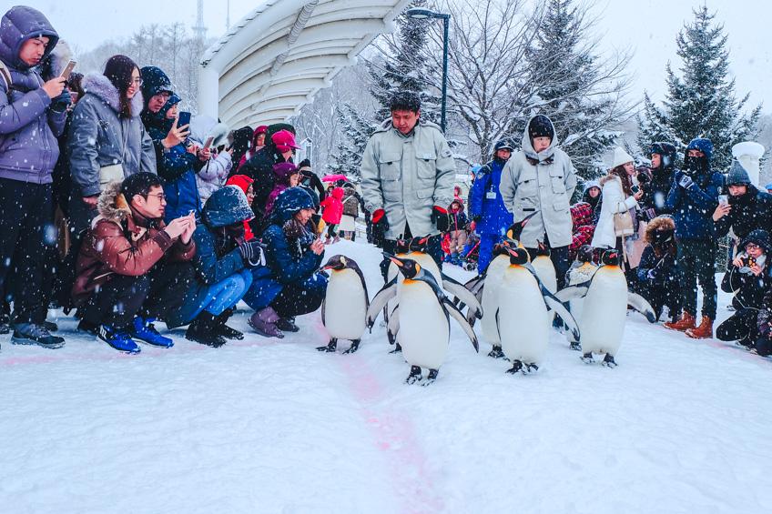 ที่เที่ยวคนรักสัตว์ Penguin Parade