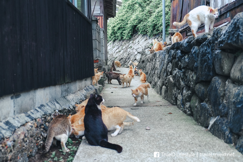 ที่เที่ยวคนรักสัตว์ Aoshima