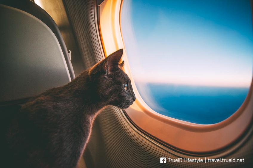 วิธีนำสัตว์เลี้ยงขึ้นเครื่องบิน