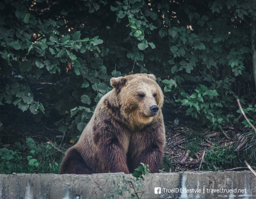 ที่เที่ยวคนรักสัตว์ กรุงเบิร์น