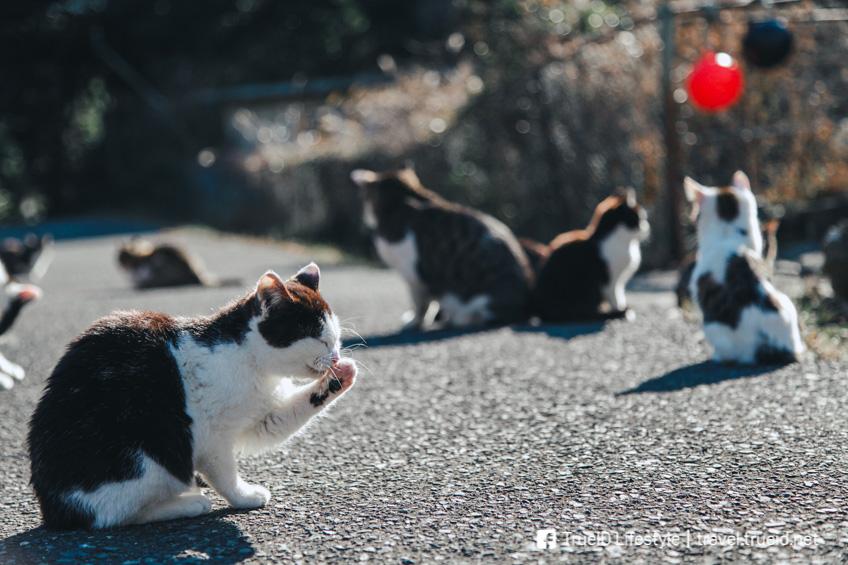 ที่เที่ยวคนรักสัตว์ Tashirojima