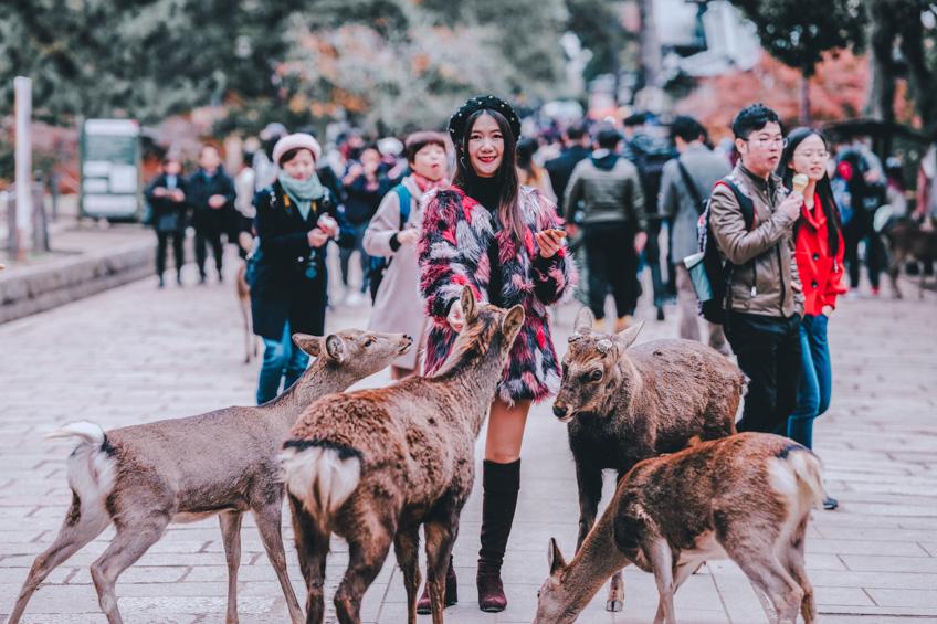 นารา ที่เที่ยวคนรักสัตว์