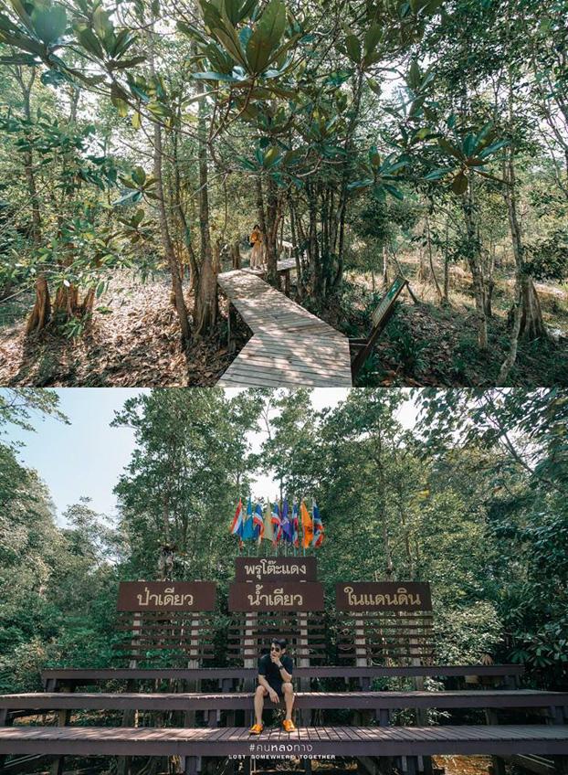 สุไหงโก-ลก นราธิวาส ป่าพรุโต๊ะแดง