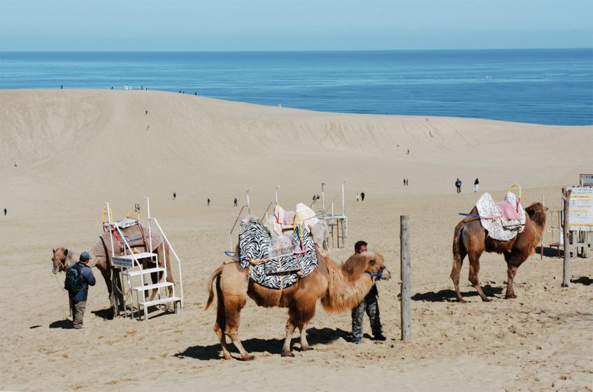 Tottori Sand Dunes เที่ยวญี่ปุ่น ฉบับมินิมอล