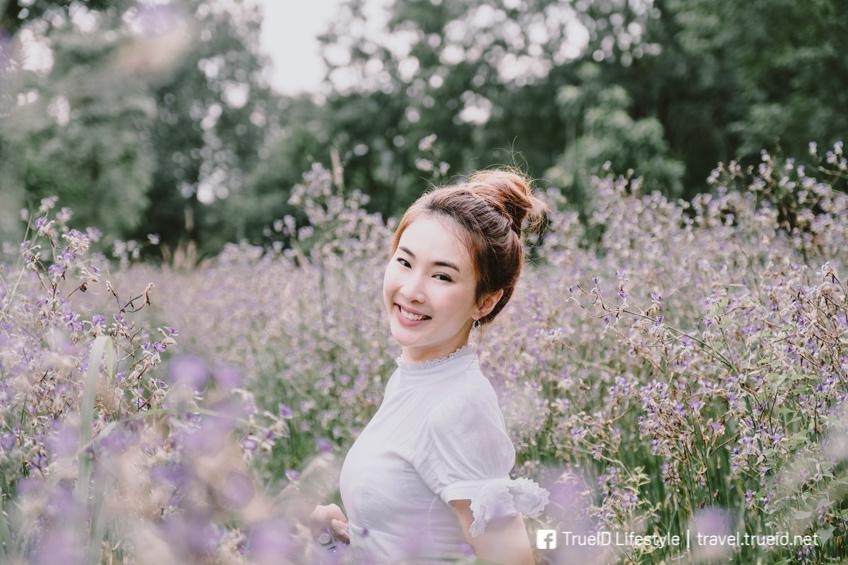 ทุ่งดอกหงอนนาค เที่ยวปราจีนบุรี