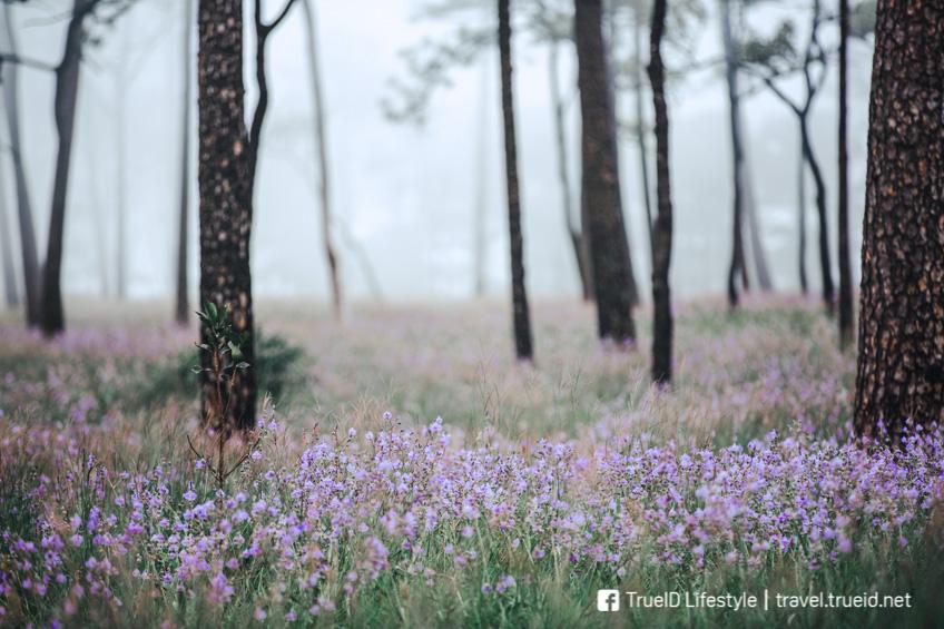 อุทยานแห่งชาติ เที่ยวหน้าฝน ทุ่งดอกหงอนนาค