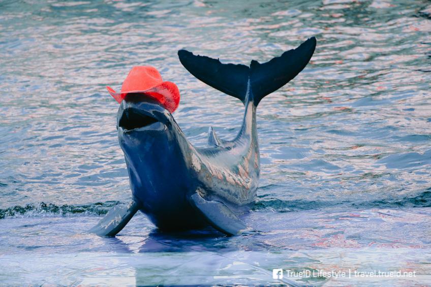 ที่เที่ยวสวยพัทยา Pattaya Dolphin World