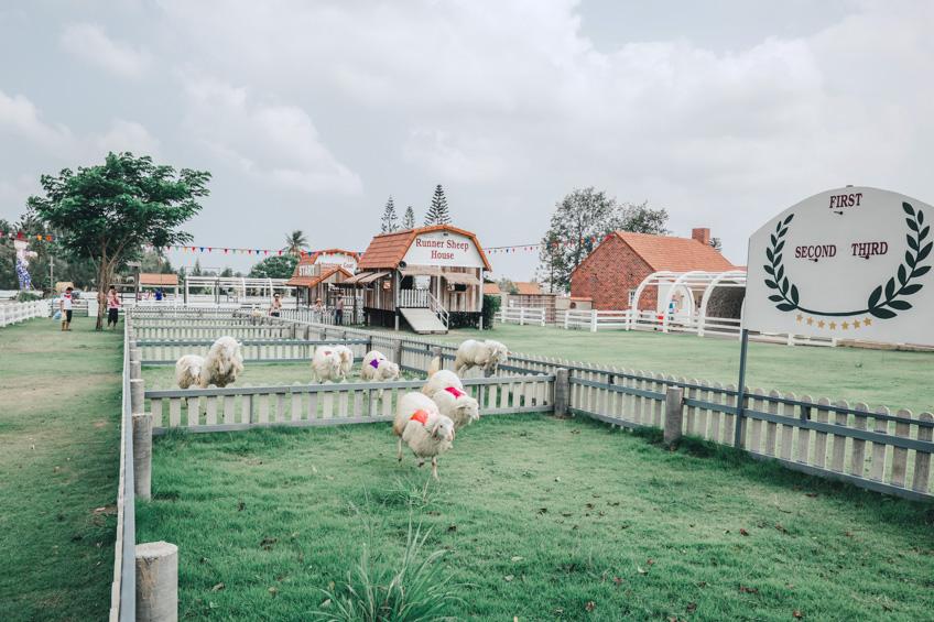 ฟาร์มแกะ พัทยา ที่เที่ยวพัทยา