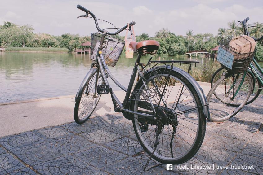 ปั่นจักรยานบางกระเจ้า สมุทรปราการ