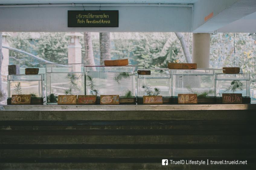 พิพิธภัณฑ์ปลากัดไทย บางกระเจ้า สมุทรปราการ