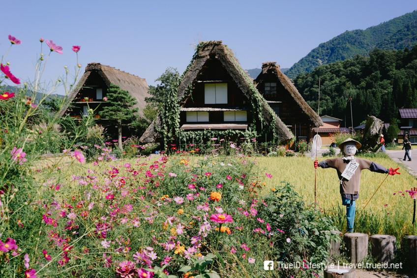 เที่ยวญี่ปุ่นหน้าร้อน หมู่บ้านชิราคาวาโกะ