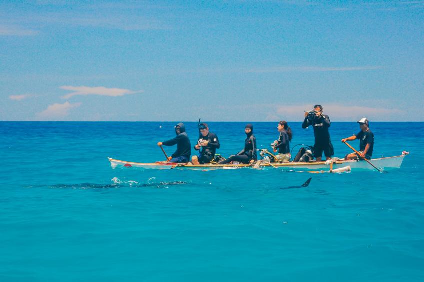Donsol ฟิลิปปินส์ ว่ายน้ำกับฉลามวาฬ