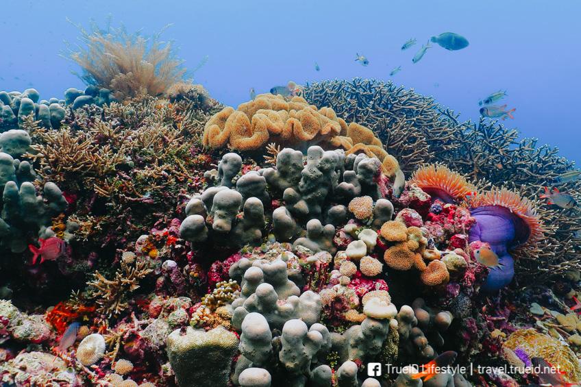 Tubbataha Reef เที่ยวฟิลิปปินส์
