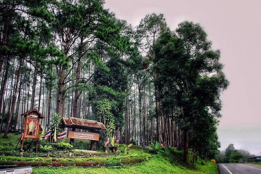 สวนป่าดอยบ่อหลวง ที่พักเชียงใหม่