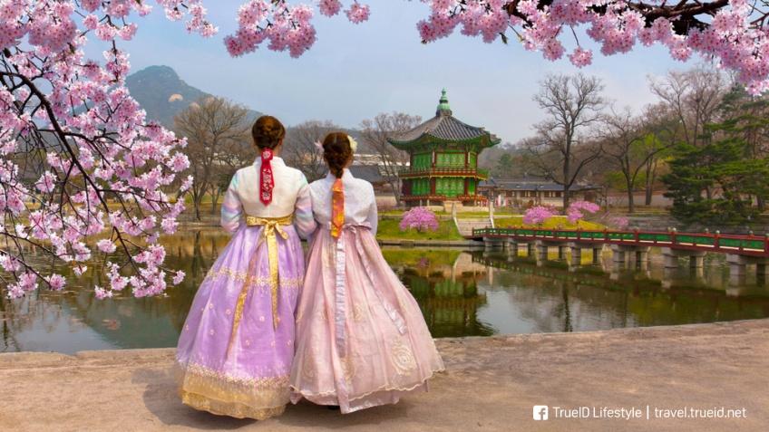 เที่ยวเกาหลีใต้ ฤดูใบไม้ผลิ