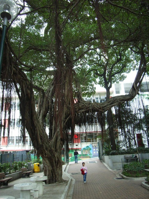 Blake Garden สวนสาธารณะ ฮ่องกง