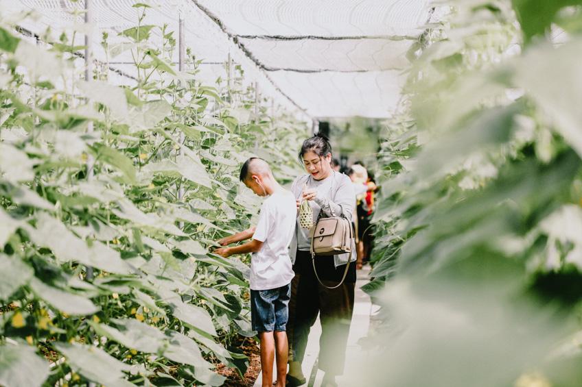 Coro Field เที่ยวสวนผึ้ง ราชบุรี