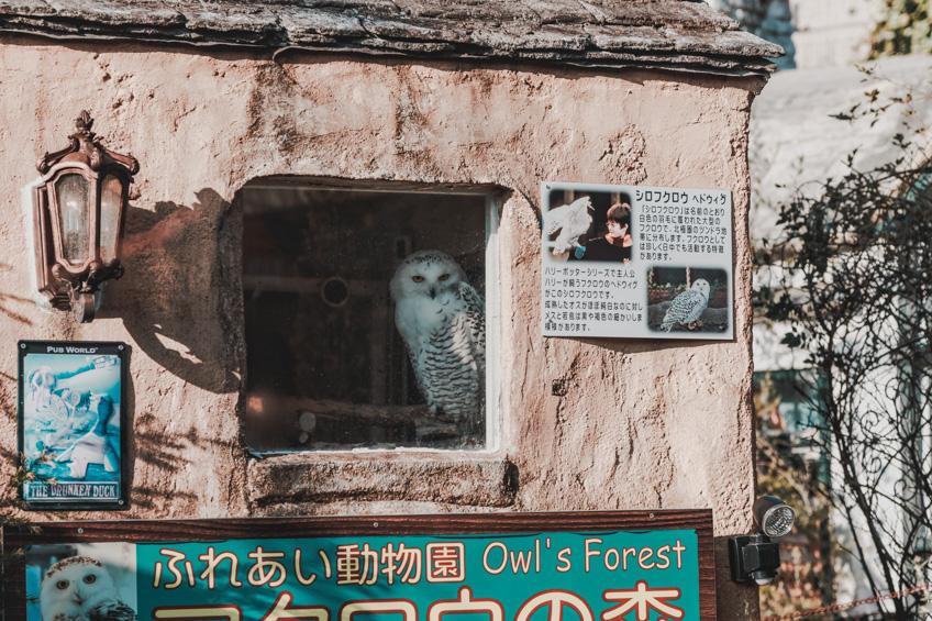 เที่ยวญี่ปุ่น Yufuin Floral Village