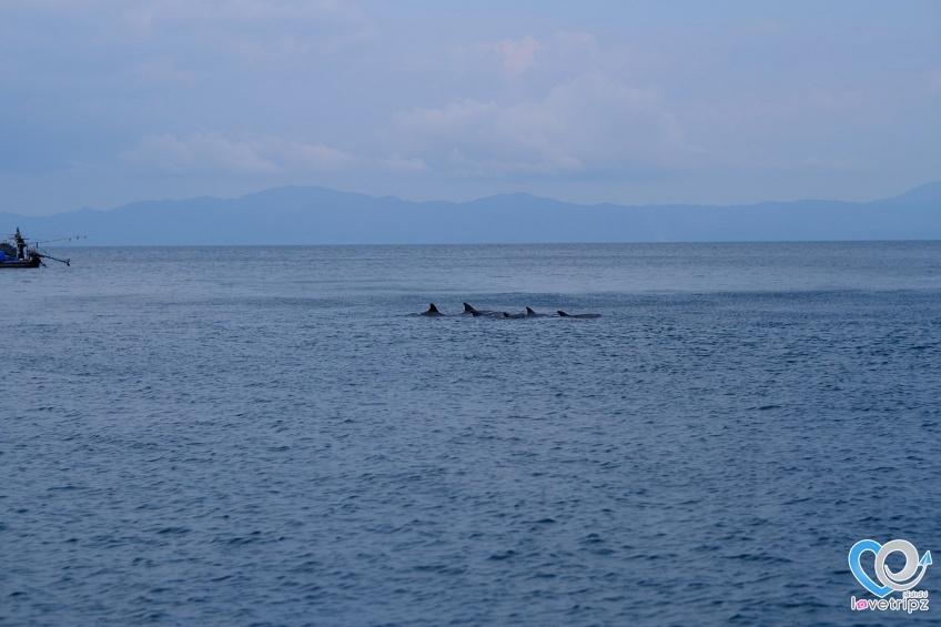 โลมา เกาะซาลิ