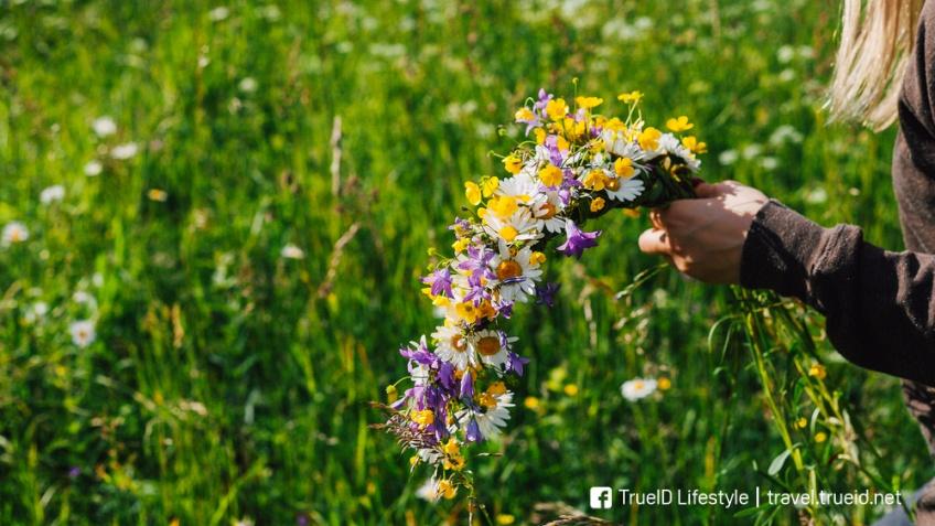 ดอกไม้ เทศกาล midsummer