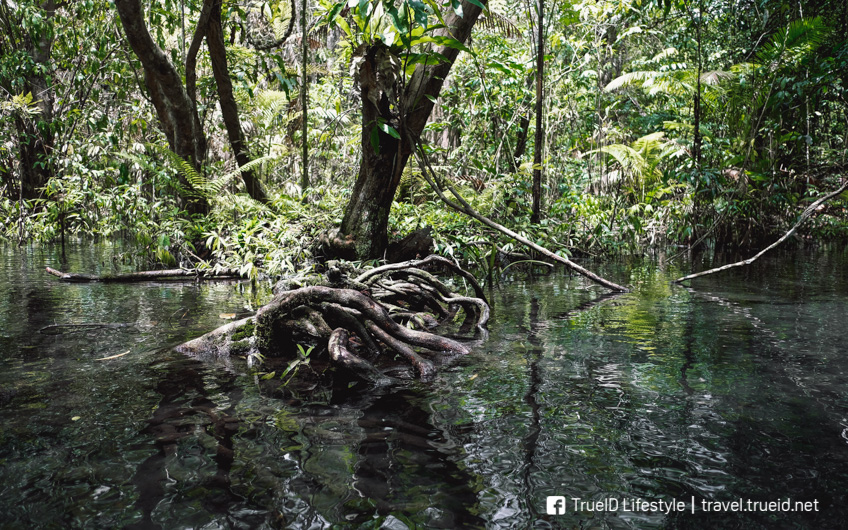 ป่าต้นน้ำ บ้านน้ำราด ที่เที่ยวใหม่ UNSEEN สุราษฎร์ธานี