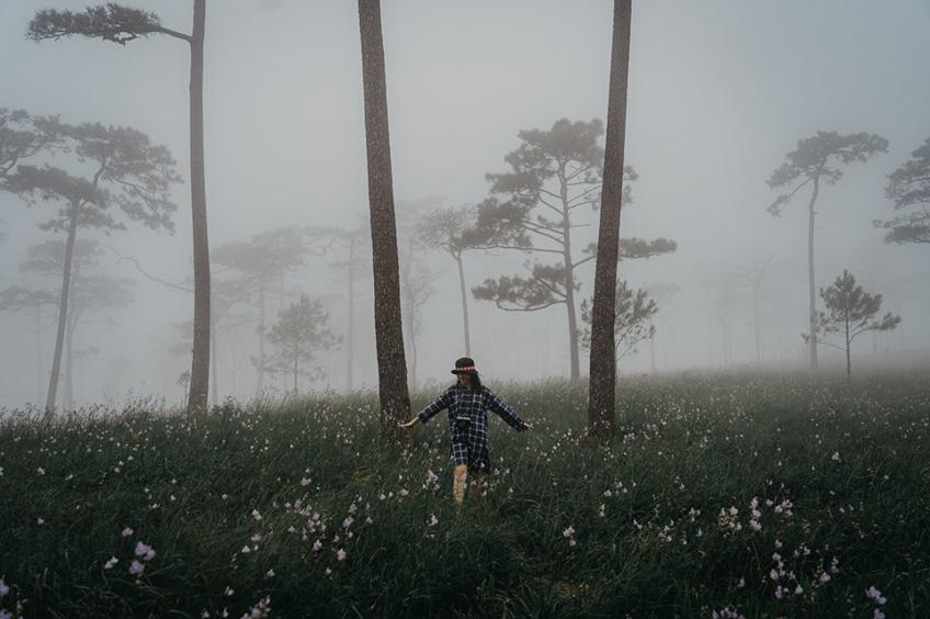 ทุ่งดอกหงอนนาค ภูสอยดาว อุทยานแห่งชาติ