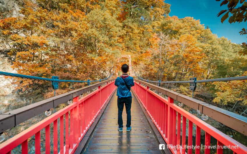 โจซังเค ออนเซ็น ใบไม้เปลี่ยนสี ญี่ปุ่น 2019