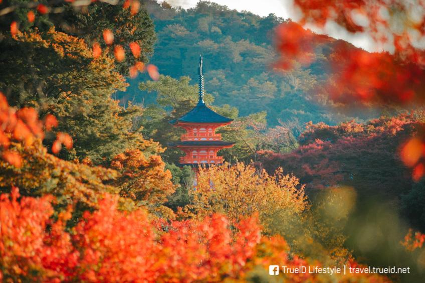 วัดน้ำใส ที่ชม ใบไม้เปลี่ยนสี ญี่ปุ่น 2019